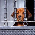 Cómo evitar que el divorcio afecte a sus mascotas